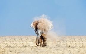 elephant, desert, dust, sand