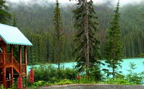 悠活, 加拿大, 森林, 湖