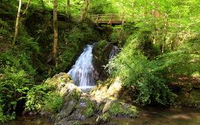 cascade, pont, arbres, paysage
