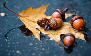 осень, лес, листья, желудь, лужа, вода, погода