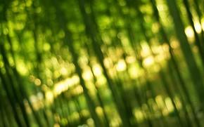 бамбук, зелень, свет, боке