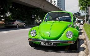 scarafaggio, verde, Volkswagen