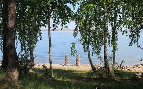 湖边的树木, 桦木, 池塘, 树, 景观