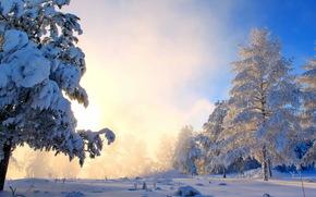 seasons, winter, snow trees, nature wallpapers, зима