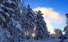 seasons, winter, snow trees, nature wallpapers, эима