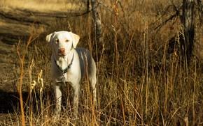 dog, friend, autumn