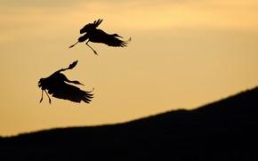 Birds, pair, stork, Silhouettes, slope, sky