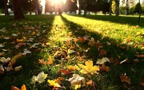 leaves, autumn, sun