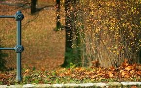 pietre, fogliame, autunno, cespuglio