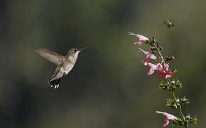 птица, колибри, насекомое, цветок, пчела, розовый, зелень