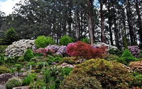 Giardini, nazionale rododendro olinda, Australia