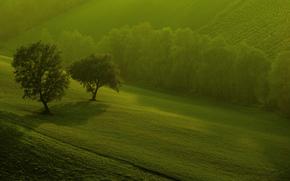 природа, поля, деревья, утро, зелень