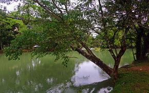 river, agua azul, landscape