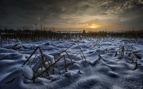 field, Winter, night
