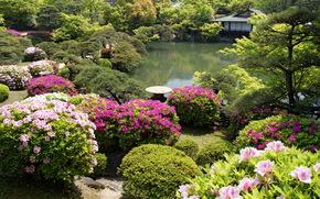 jardin, kobe, Japon