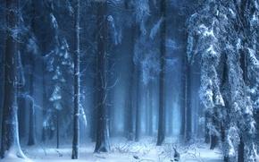 las, zima, krajobraz