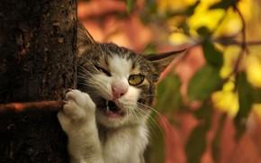 кошка, кот, дерево, ствол, ветка, клыки