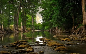 river, Trees, forest, water, day, the roots