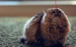 cat, thread