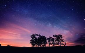 noc, niebo, Gwiazda, drzew, Silhouettes