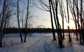 alberi, sole, tramonto, traccia, natura, paesaggio, bellezza, carta da parati, sfondo