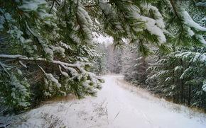 Зима, Снег, Ветки, Деревья