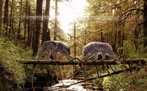Loups, couple, fort, arbre, tronc, aiguilles, mousse