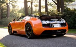 machinery, Sport, Car, Bugatti Veyron, orange, black, road, trees., bugatti