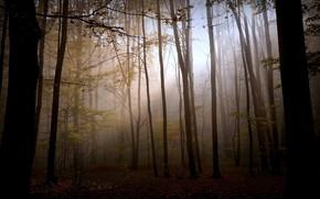 Nature, fort, tristesse, lumire, automne