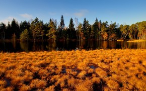 лес, река, осень, трава, желтая