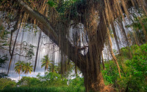 albero, foresta, palma