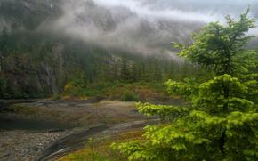 горы, лес, река, туман