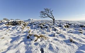 Regno Unito, Inghilterra, Yorkshire del nord, Ingleton, inverno, neve, albero, cielo, john Ormerod fotografia