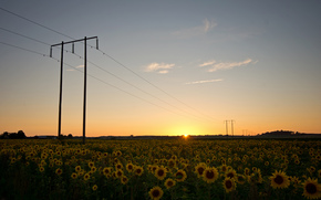 Sweden, nature, field, Sunflowers, Wire, supports, evening, sunset, sun, sky, clouds