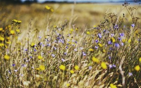 field, Flowers, summer, nature