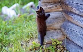 Cats, cat, cat, climbs, wall, tree, nature. background, wallpaper