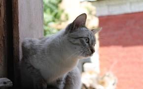 cat, window, nature