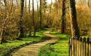 autunno, foresta, traccia, recinto