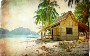 Annata, capanna, spiaggia, mare, palma, Noci di cocco, nautilo