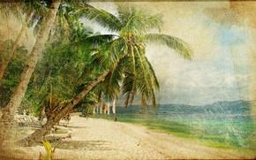 Annata, vecchia foto, palma, mare, costa, persone
