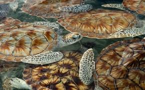 swim, Turtles, Turtles, sea