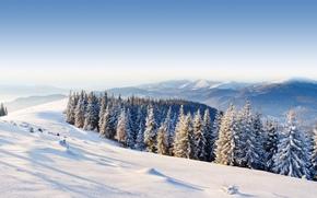 foresta, inverno, ghiaccio, moutain, Montagne, neve, , alberi, giorno