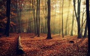 paesaggi, paesaggi, alberi, alberi, autunno