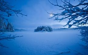 paesaggio, paesaggi, inverno, neve, ramo