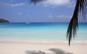 island, Seychelles, ocean, palm