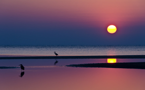 Вечер, малиновый, яркий, закат, солнце, синее, небо, море, вода, отражение, птицы, цапли