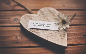 amore, Amore, cuore, fiore, camomilla, iscrizione