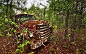 machine, forest, background