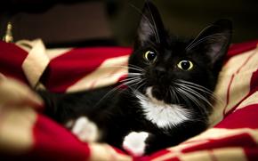 赤, 子猫, 甘く, フィート, 猫, 毛布, 白, 動物, 黒
