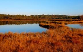 осень, озеро, трава, сухая, желтая, лес, деревья, небо